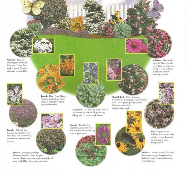 Butterfly Garden Ideas butterfly landscapes and garden design One Of Our Favorite Aspects Of The Butterfly Garden Theme Is The Bright Flowers If You Love Color This Theme Is Perfect For You